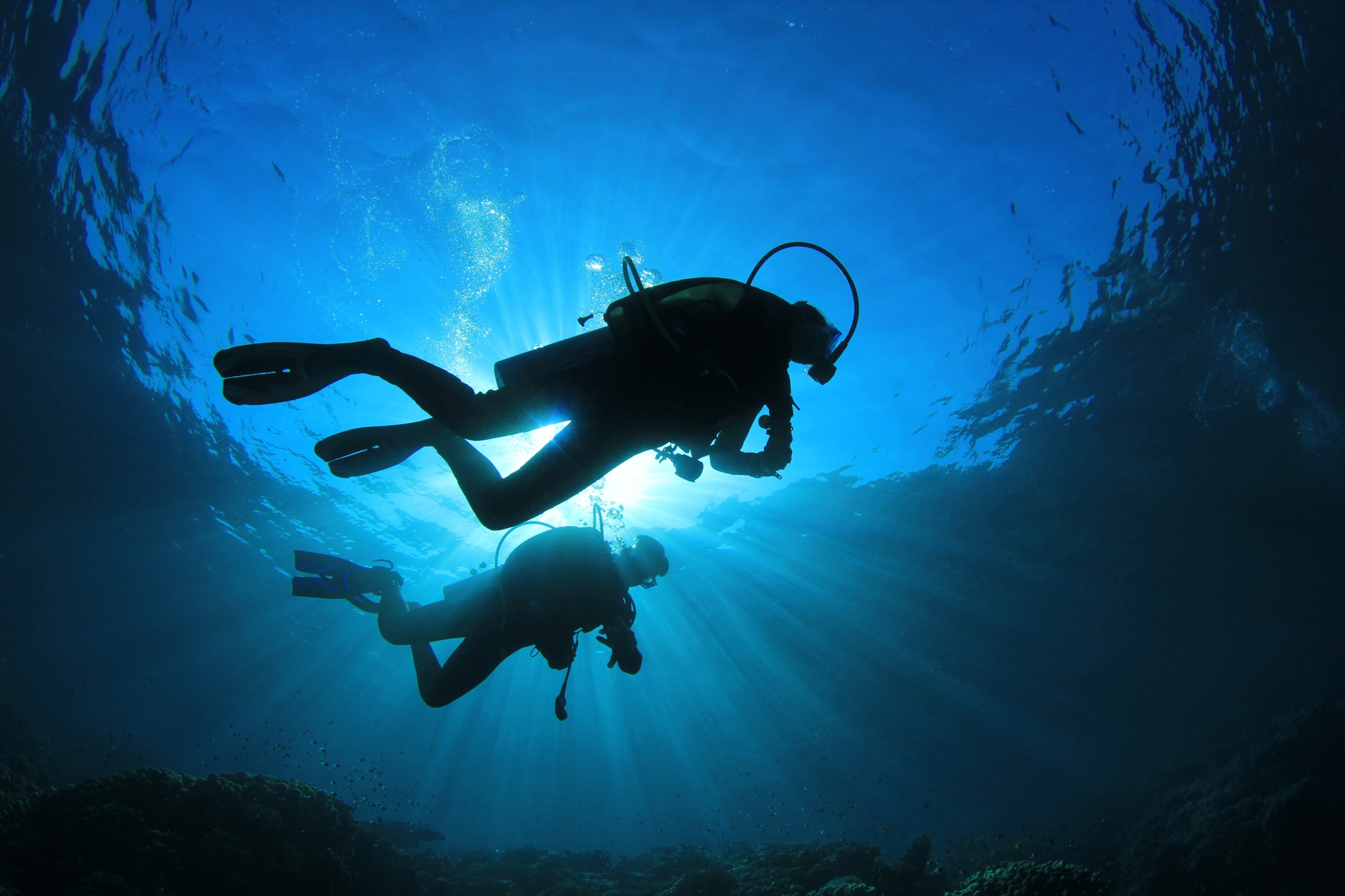 Unisciti a noi per scoprire le meraglie del mondo sommerso!